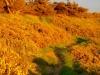 60-la-lande-en-automne-3
